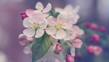 fragrance notes floral